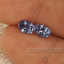 oval pair of tanzanites